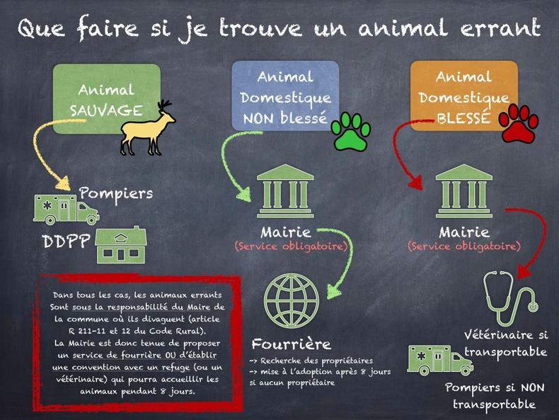 Process Animal Errant