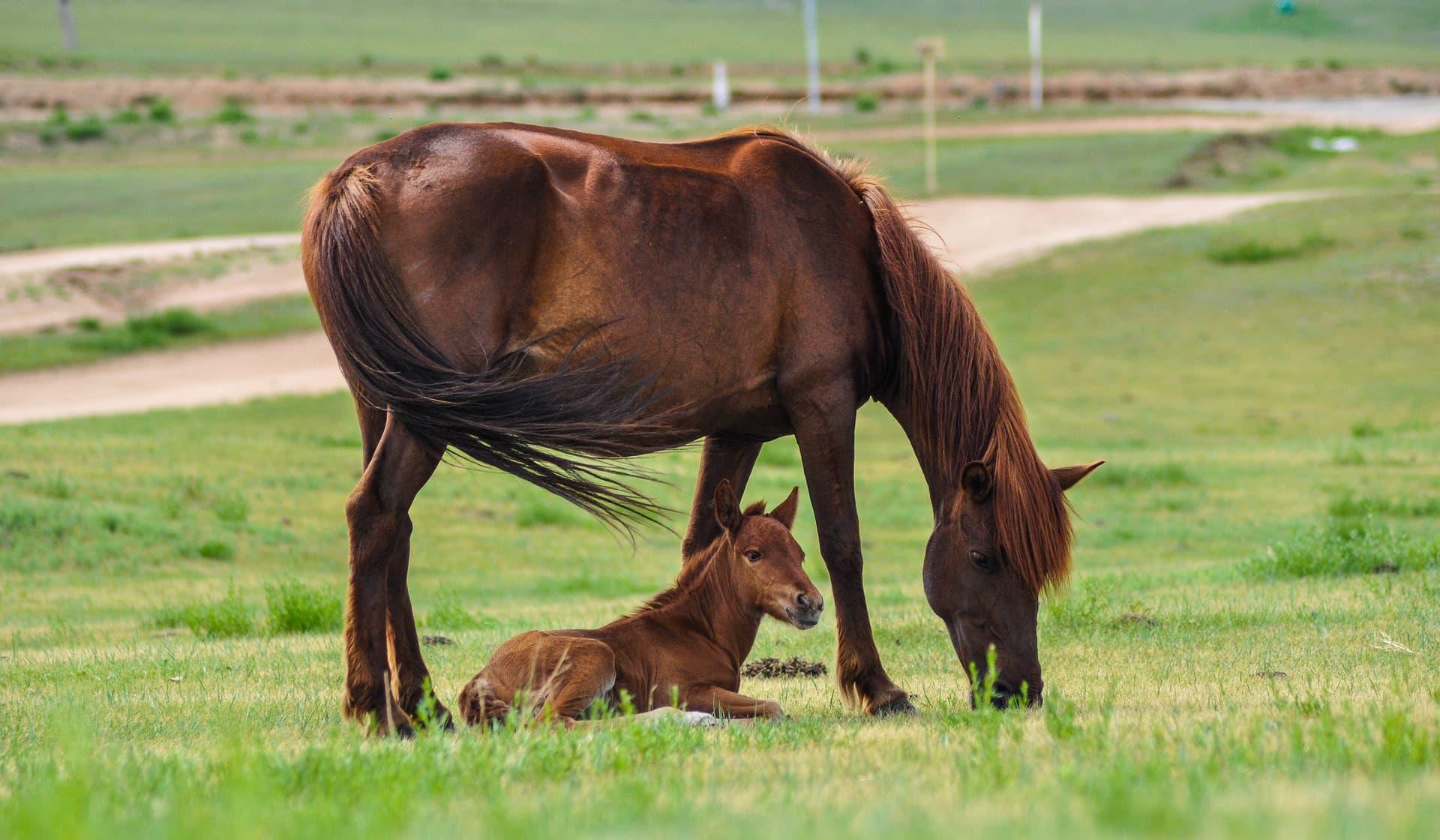 Service reproduction canine et équine