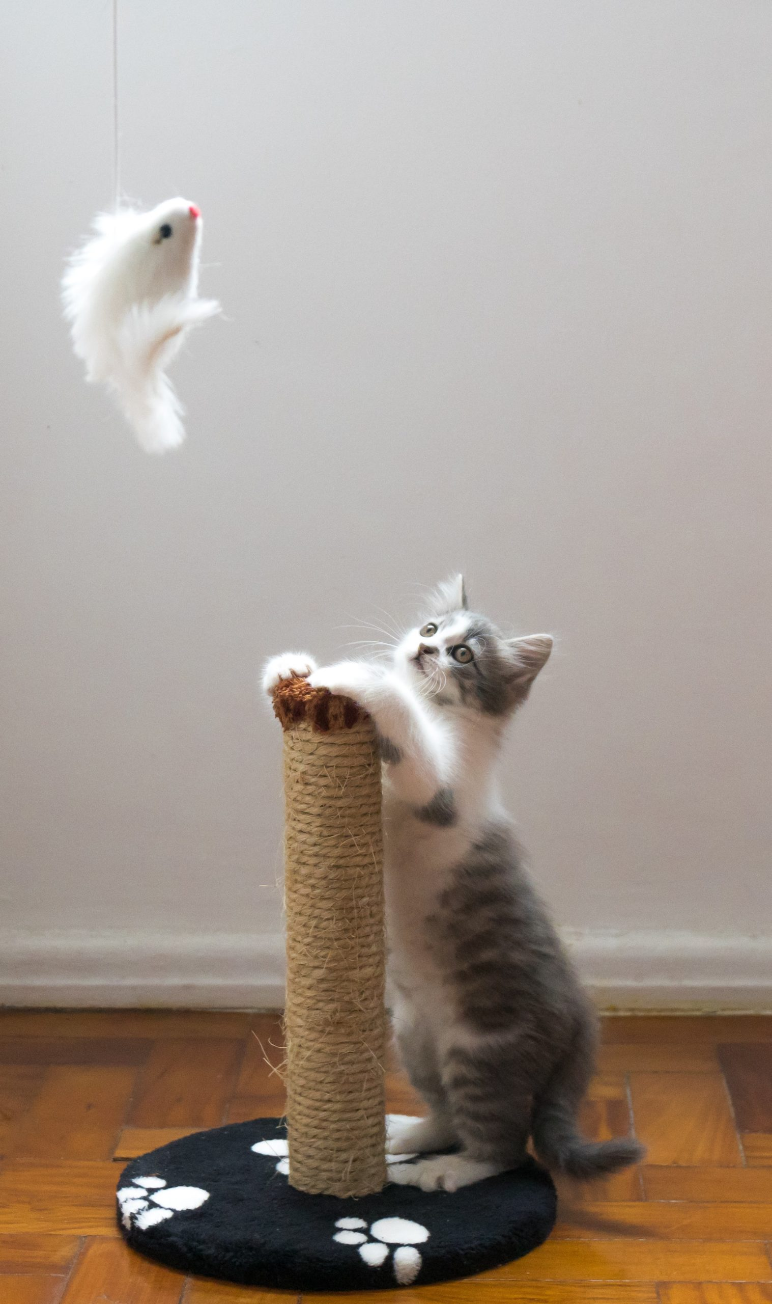 chaton jeu